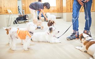 パピー(仔犬)教室の様子(1)
