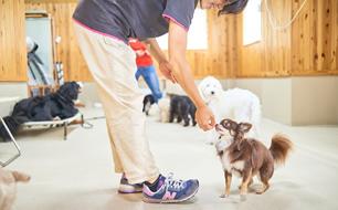 ドッグトレーニングの様子(4)