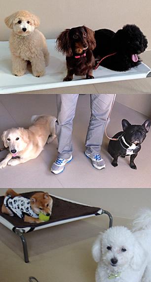 ドッグデイケア保育(犬の保育園)の様子(1)