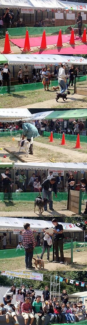 認定NPO法人 日本アニマルトラスト様「にゃんだ祭り」(1)