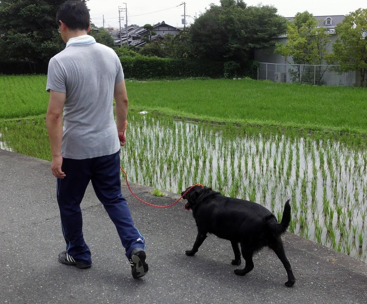 プライベートレッスン クロ君(2)