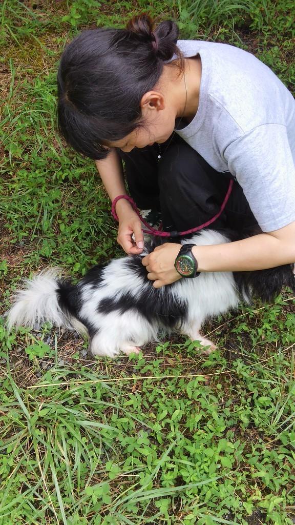 保護犬のリハビリ(心の)トレーニング(3)