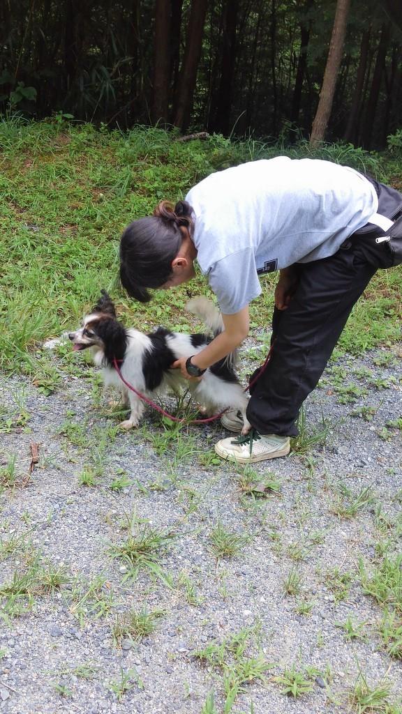 保護犬のリハビリ(心の)トレーニング(4)