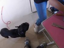 見物犬(1)