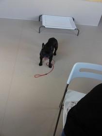 見物犬(2)