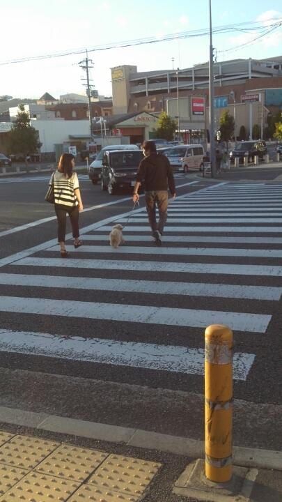 散歩はどこから始まってる?(3)