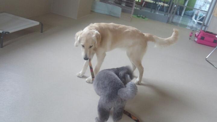 犬どうしの遊び、からの一人遊び(3)