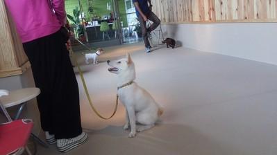 Japanese Dog(2)
