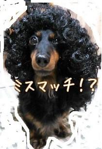 犬の性格を知る・・・だけじゃダメ