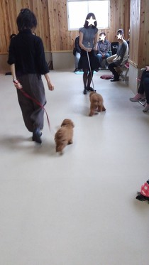 テーマは散歩!(3)
