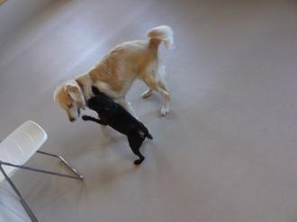 大型犬&小型犬(1)