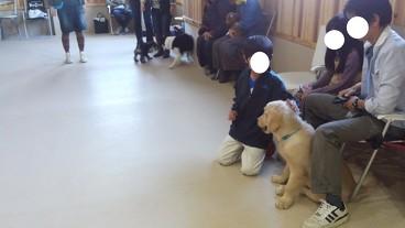 2013年11月17日のパピークラス&しつけ教室(3)