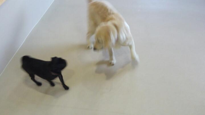 なんてったって犬(2)