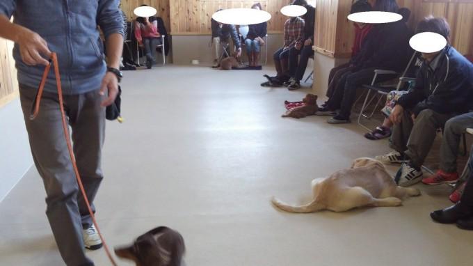 犬の興奮(1)