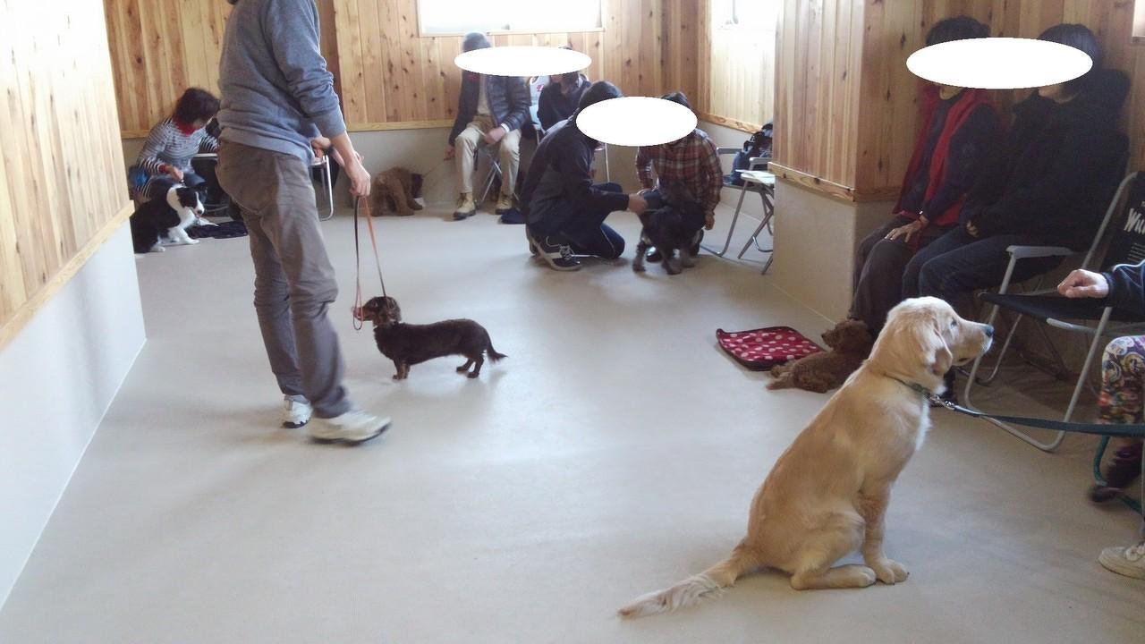 犬の興奮(2)