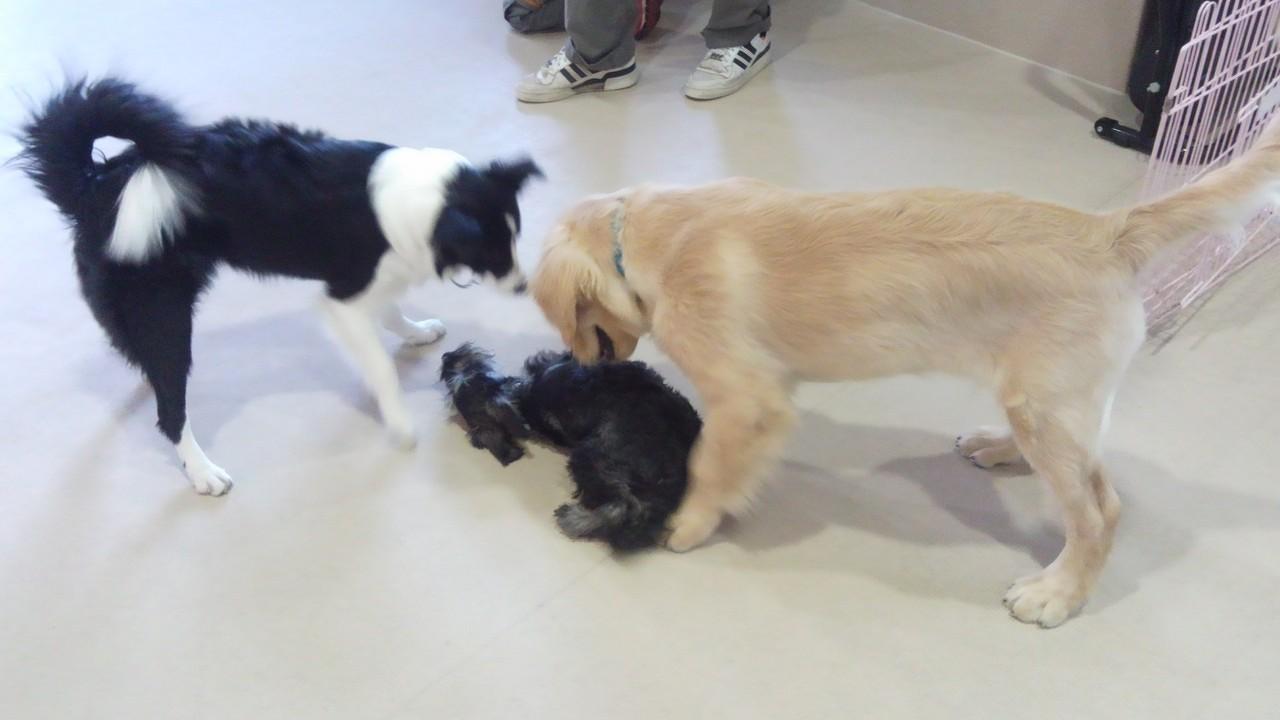 犬の興奮(4)