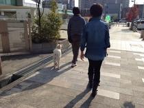お散歩レッスン(2)
