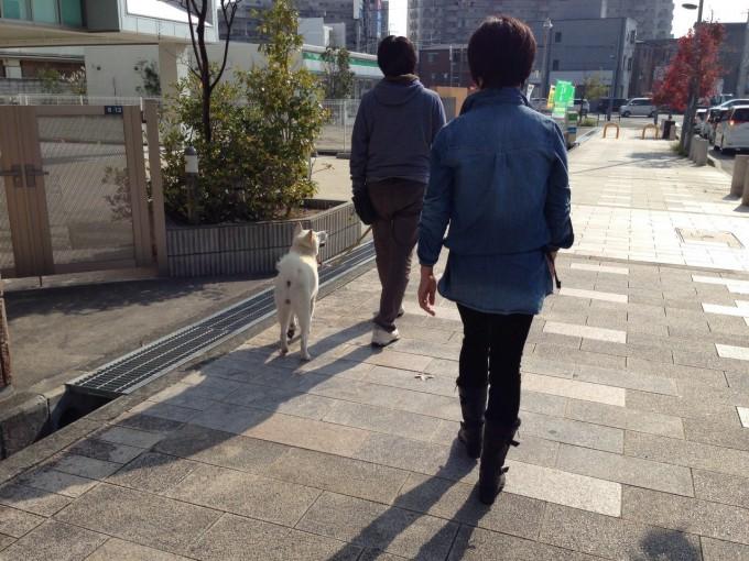 お散歩レッスン(3)