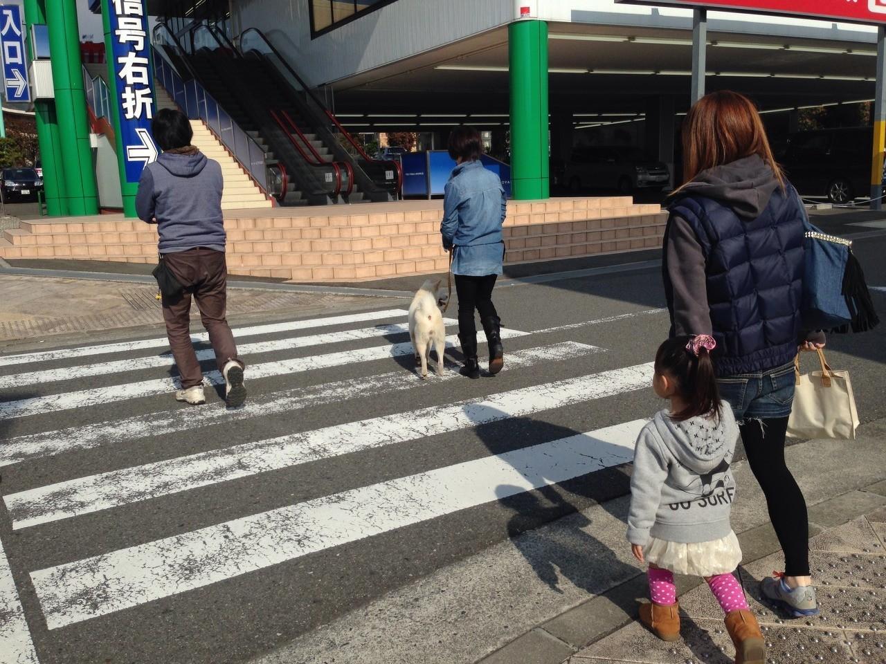 お散歩レッスン(5)