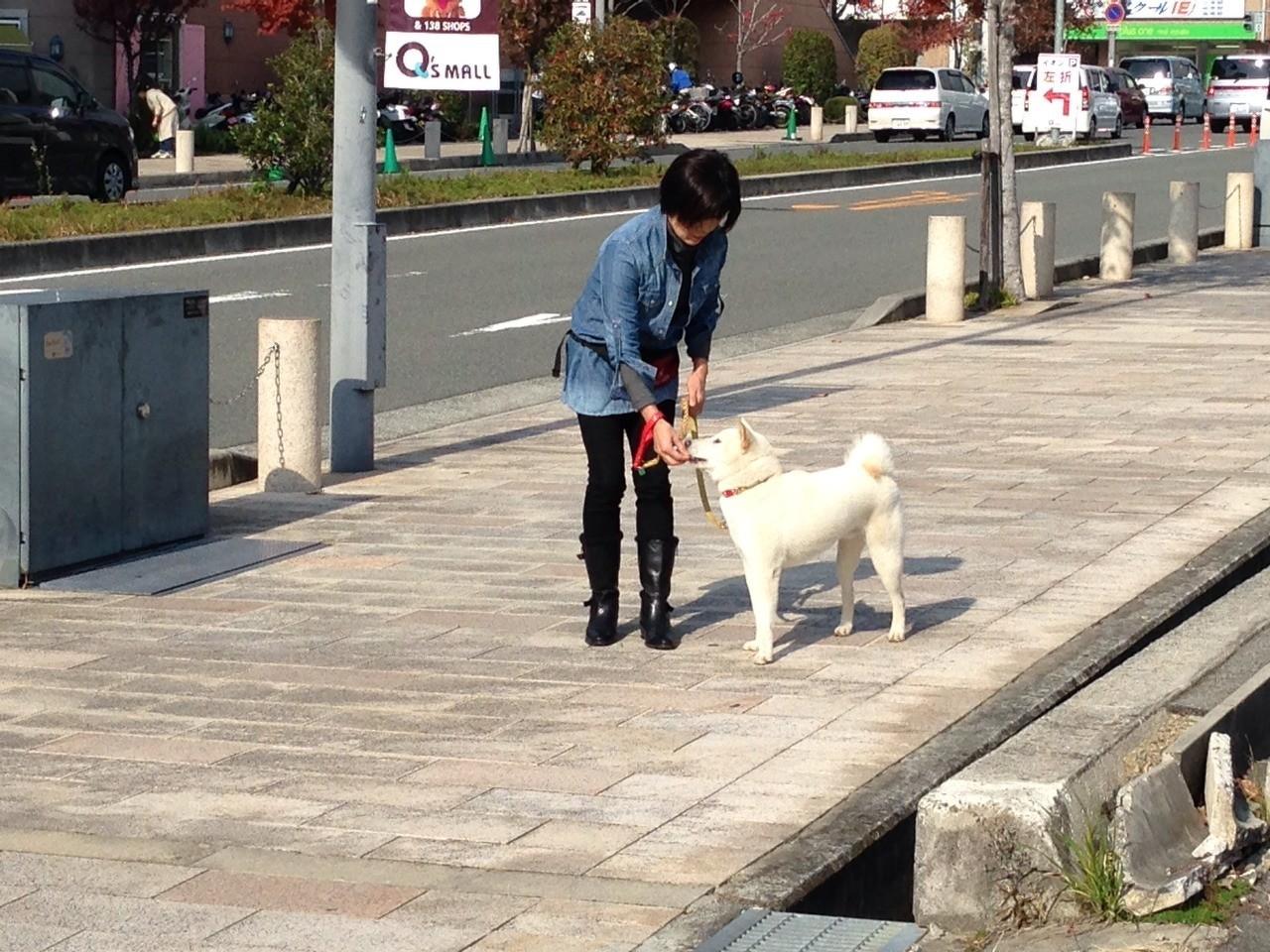 お散歩レッスン(6)