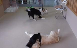わやくちゃな犬達(1)