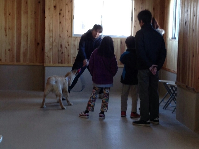 大型犬との遊び(1)