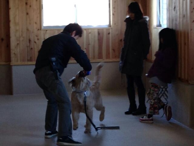 大型犬との遊び(3)