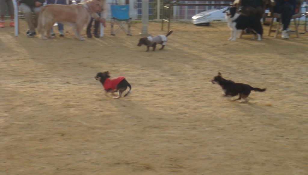 フリータイム小型犬2