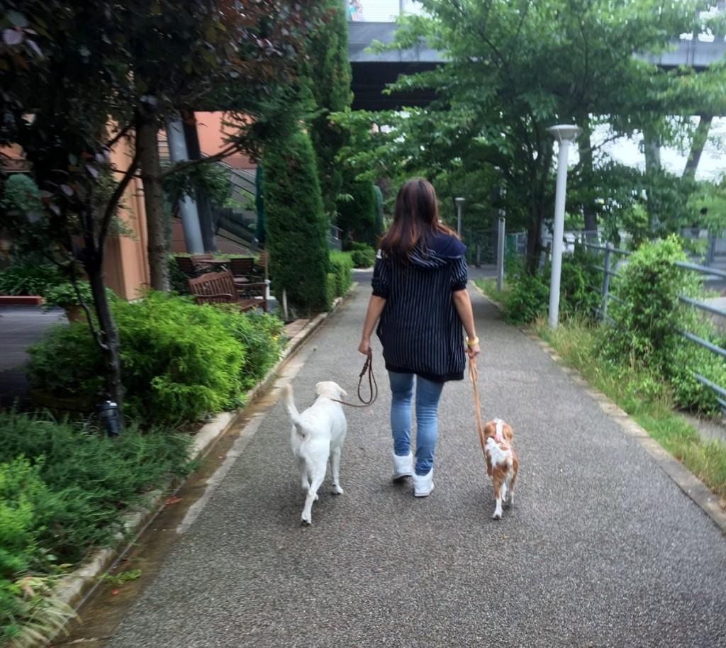 雨の合間のお散歩