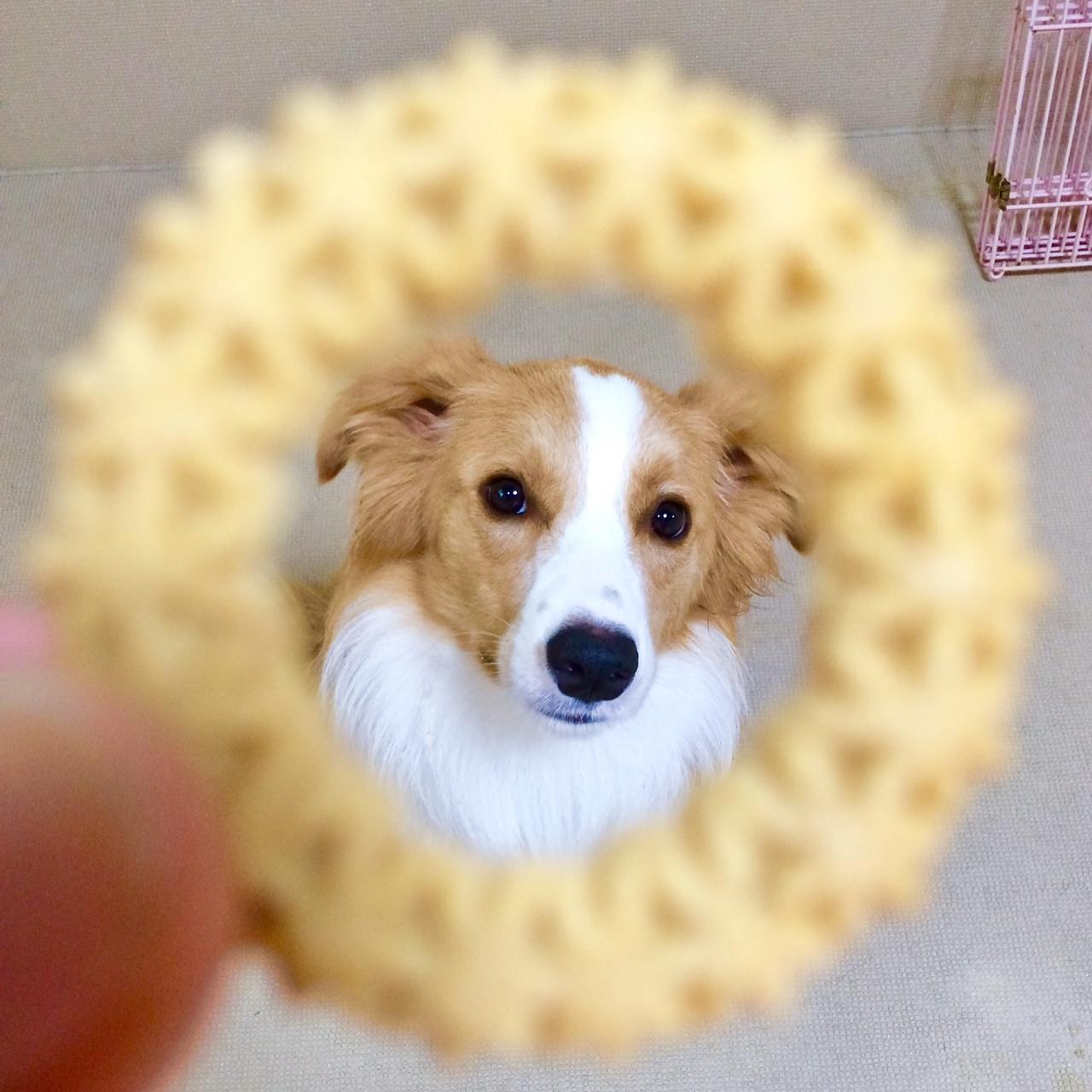 ジークとクッキー